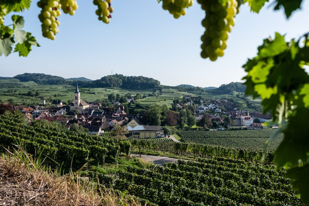 Kaiserstuhl, Tyskland, vindruer, kirke, by, utsikt