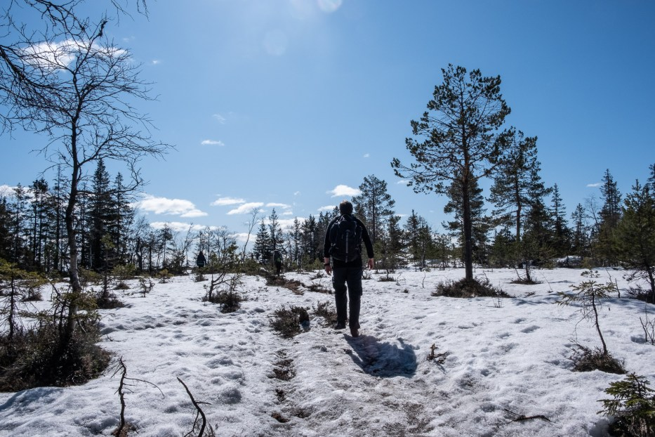 Oslo, Oslomarka, forest, trees, hike, hiking, trees, nature, local, travel, snow, sun, Maridalen