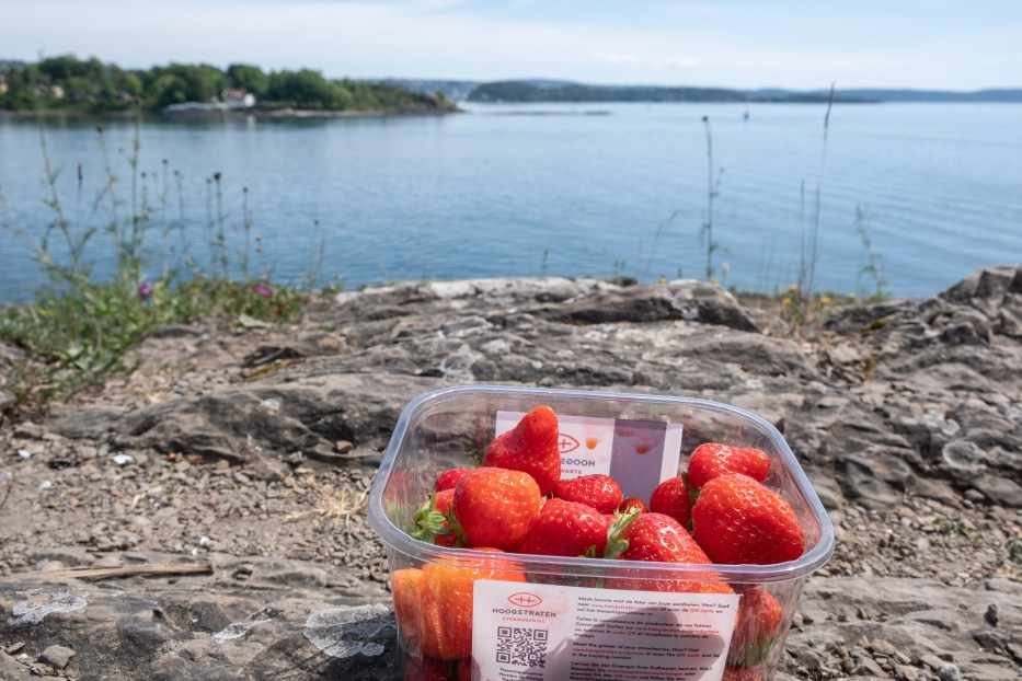 Oslo, Norway, Oslo fjord, island hopping, ferry, summer, strawberries, sea, view
