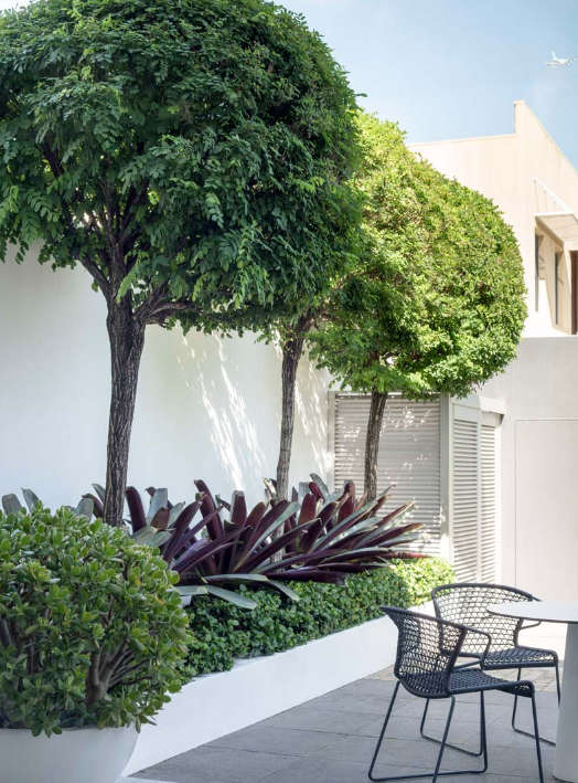 A Sophisticated Minimalist Courtyard Garden