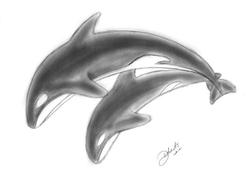 Sketch: Orcas