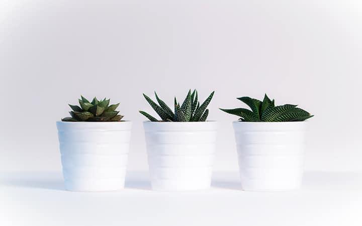 best low maintenance office plants