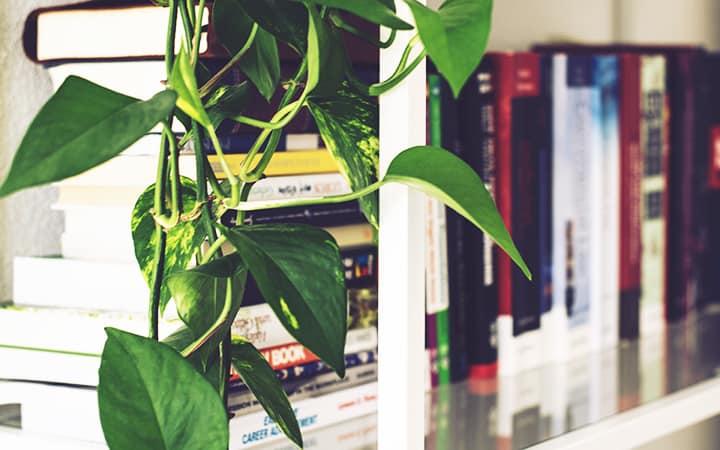 best plants for office low light