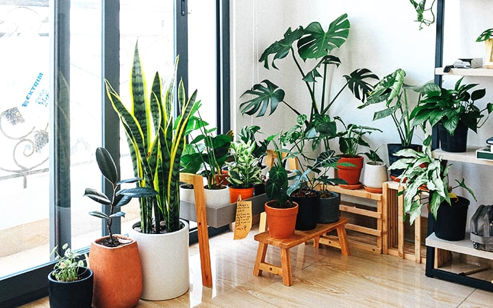stunning plants for office
