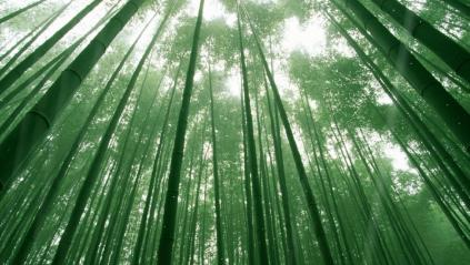 Beautiful Bamboo Forest Animated Wallpaper Preview