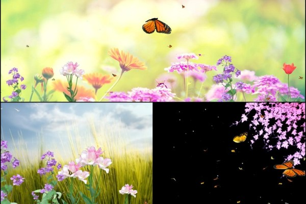 Butterfly Paradise Animated Wallpaper Preview