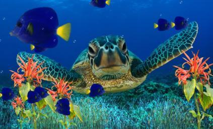Download ocean aquarium 3d