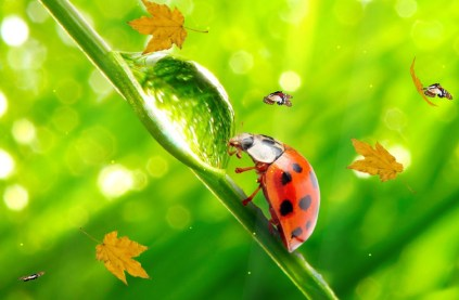 The Ladybug Animated Wallpaper Preview