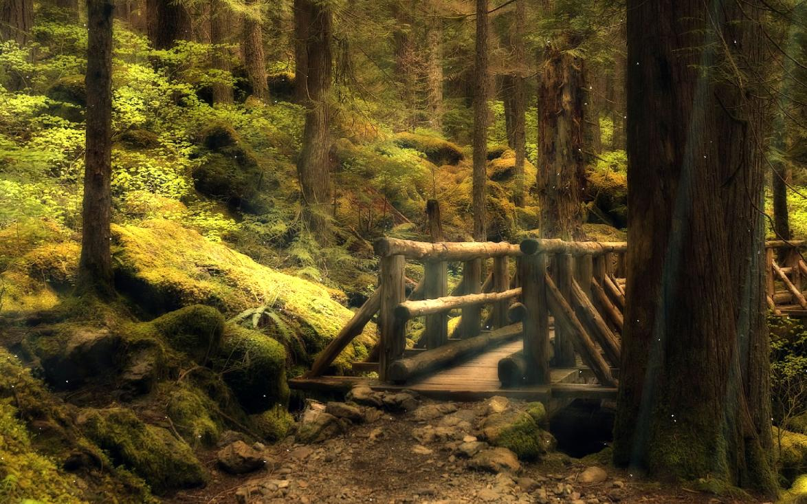 Animated Desktop Wallpaper Windows 7 The Mysterious Forest Screensaver Animated Wallpaper