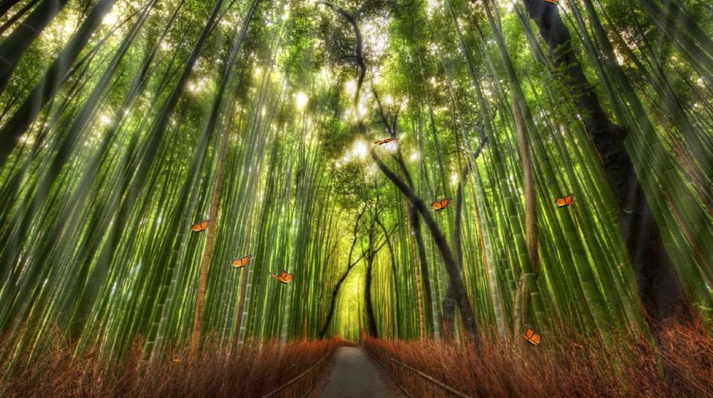 rp_BeautifulBambooForest1.jpg