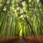 Beautiful Bamboo Forest Animated Wallpaper