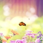 Butterfly Paradise Animated Wallpaper