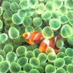 Ocean Adventure Aquarium Animated Wallpaper