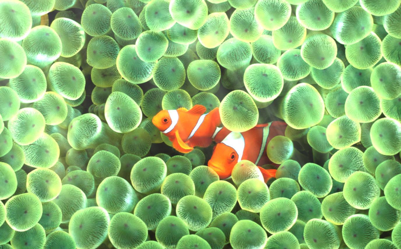 Animated Aquarium Wallpaper For Windows 7 Free Download Ocean Adventure Aquarium Animated Wallpaper