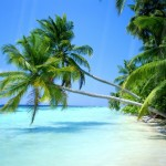 Summer Beach Animated Wallpaper