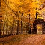 Golden Forest Animated Wallpaper