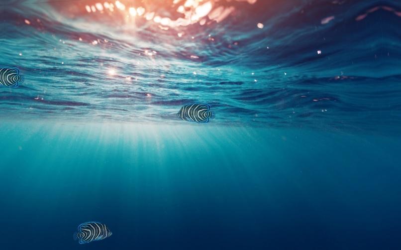 Charm_Aquarium_Preview