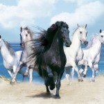 Cool 3d Horses Desktop Background