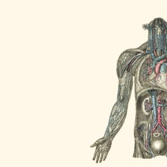 Human Muscle Cell Diagram Trailer Lights Wiring South Africa Skeletal Anatomy Body Widescreen