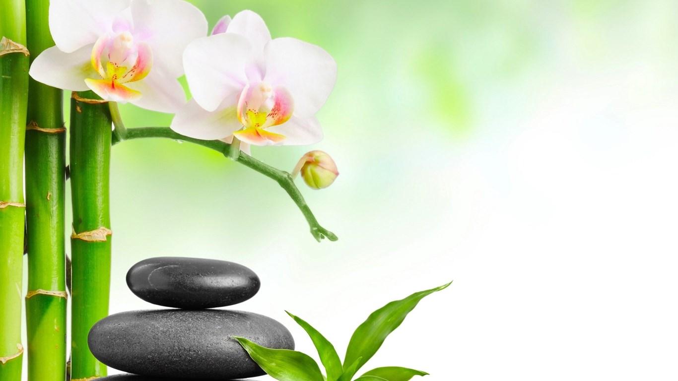 Zen Iphone 6 Wallpaper Spa Stones Bamboo Pink Flower Wallpapers Hd For Desktop