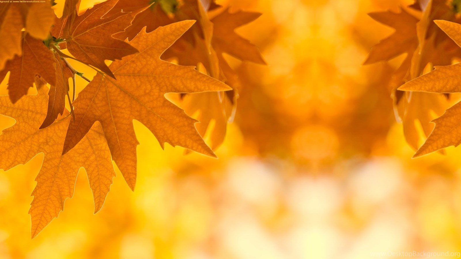 Fall Leaves Hd Mobile Wallpaper Autumn Leaves Border Design Ideas Wallpaper Fr Wallpaper