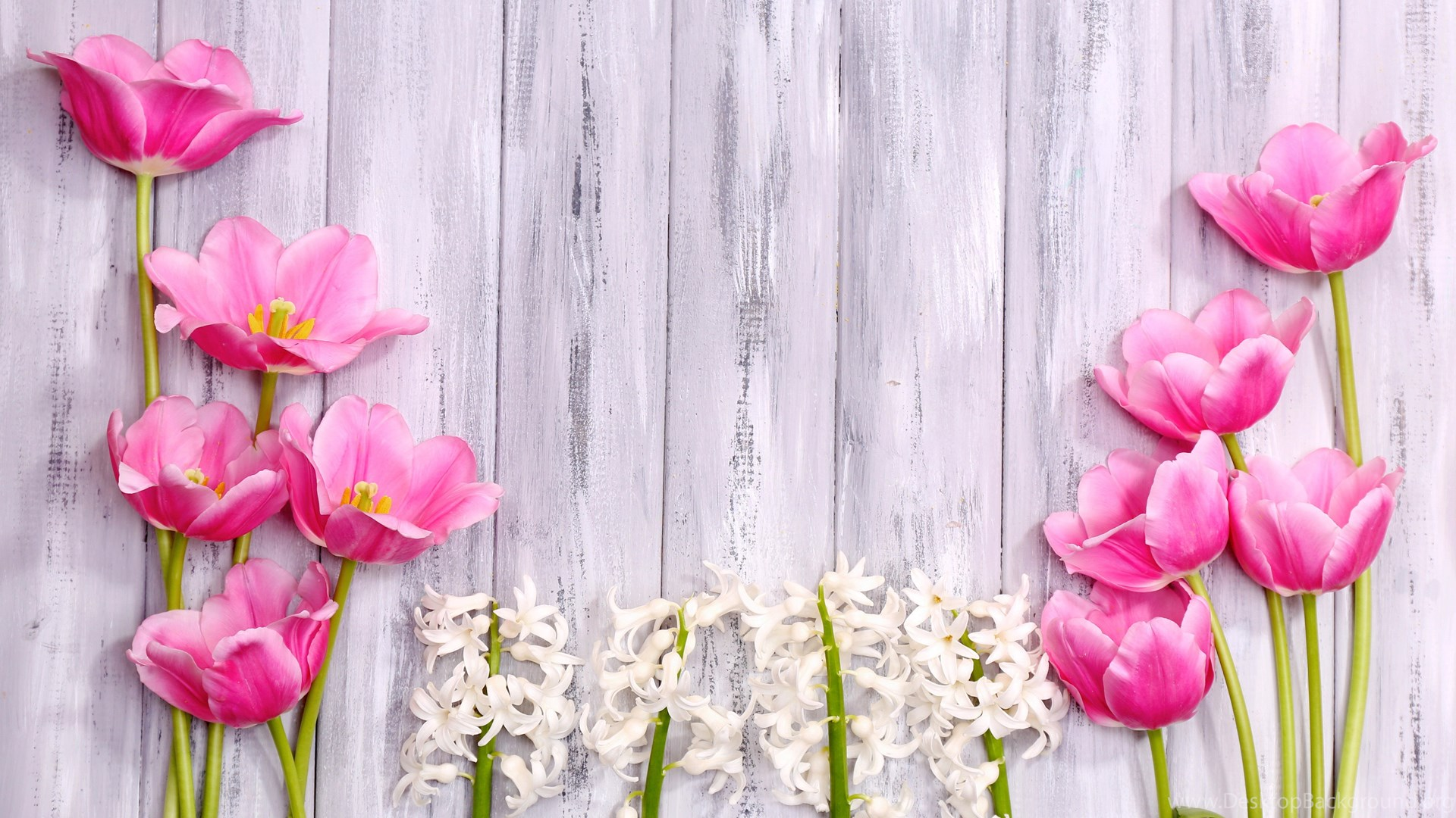 Iphone 4s Girly Wallpapers Flowers Spring Flowers Hyacinth Wood Tulips Shutterstock