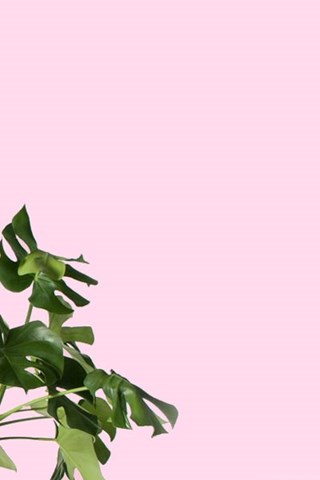 Orchid Iphone Wallpaper Monstera Plant Desktop Amp Iphone Wallpapers From Gold