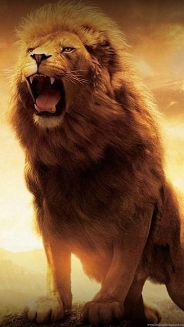 Lion Wallpaper Iphone Lion Fire Lion Wallpapers Hd For Desktop Wide 2014