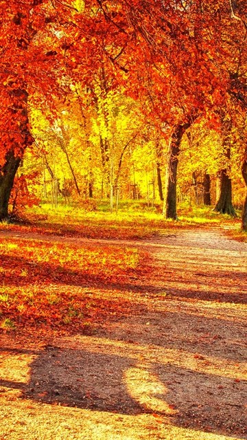 Fall Wallpaper  Cute Autumn Leaves Hd Wallpapers Desktop Background