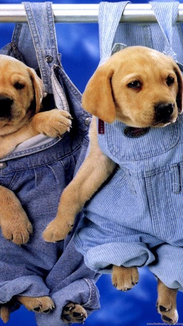 Very Cute Wallpapers Download Cute Puppy Dogs Wallpapers Cute Puppy Dogs Wallpaper