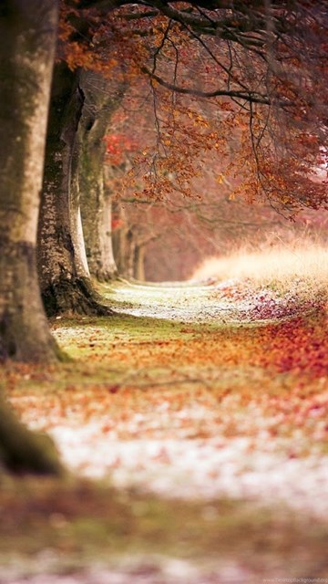 Fall Vintage Wallpaper Background Images For Photo Editing Free Download Desktop