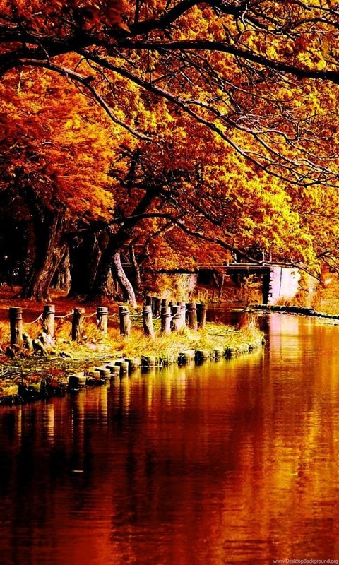 Fall Wallpaper For Tablet Autumn Tumblr Wallpapers Picture Desktop Background