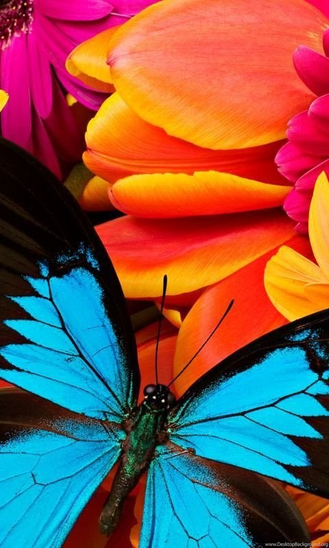 Live Wallpaper For Iphone 3gs Butterfly Animated Color Live Wallpapers For Android