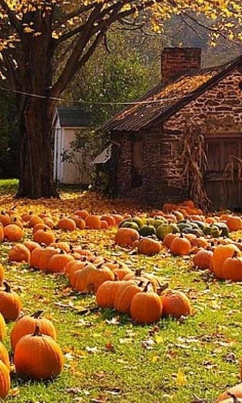Fall Autumn Iphone Wallpaper Autumn Harvest Wallpapers Widescreen Wallpaper Desktop