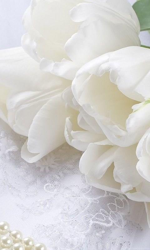 Orchid Iphone Wallpaper Pictures Gt 25th Wedding Anniversary Backgrounds Wallpapers