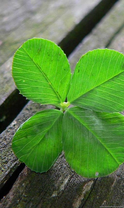 Your Name Wallpaper Iphone X Download Four Leaf Clover Hd Wallpapers For Desktop