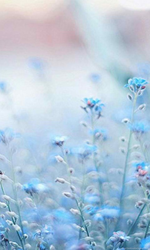 Blue aesthetic pictures for wall collage blue | pastel blue. Blue flowers cynthia selahblue 1.jpg Desktop Background