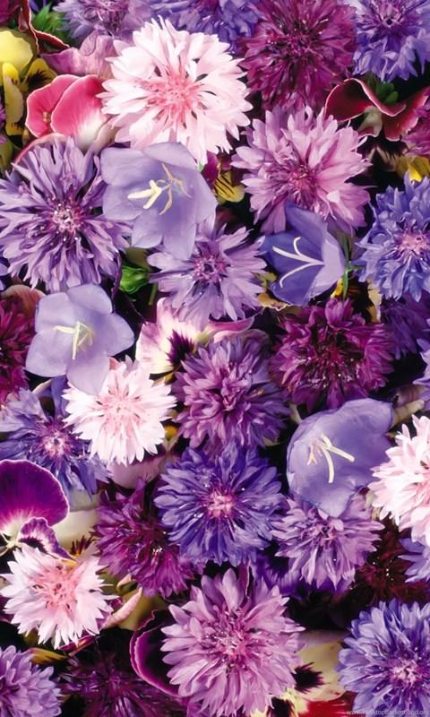 Widescreen Desktop Wallpaper Fall Purple Flowers Wallpapers Tumblr Desktop Background