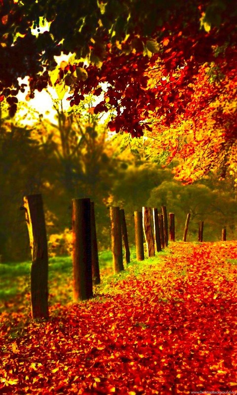 The Fall Bbc Wallpaper High Resolution Autumn Fall Leaves Wallpapers Hd 20 Full