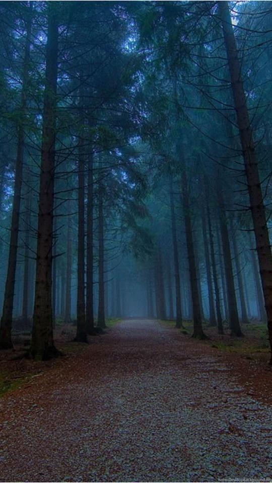 Iphone 5c Color Wallpaper Wallpapers Twilight Forest Desktop Background
