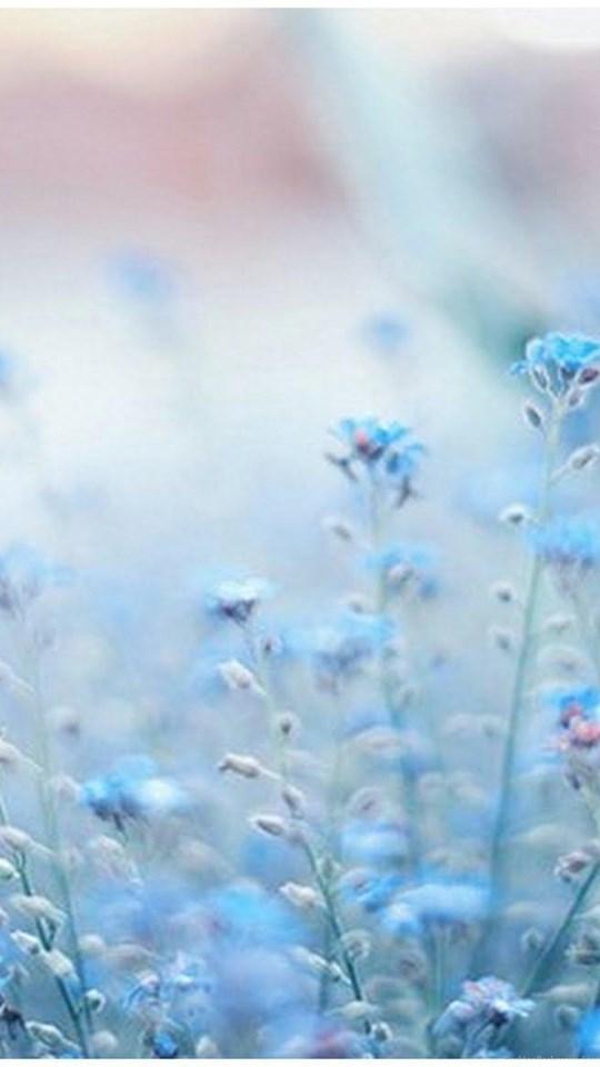 Iphone 5 Wallpaper Floral Blue Flowers Tumblr Wallpapers Desktop Background