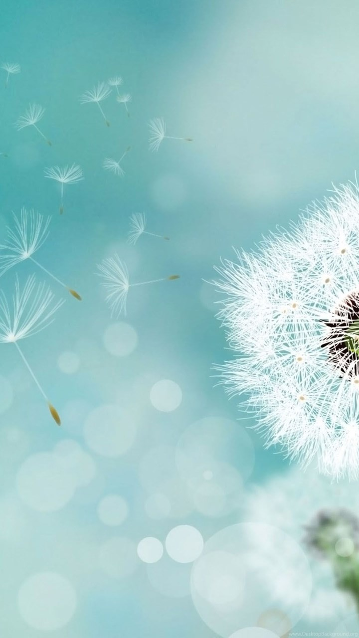 Ipod Touch 5 Hd Wallpapers Dandelion Backgrounds Wallpapers Cave Desktop Background