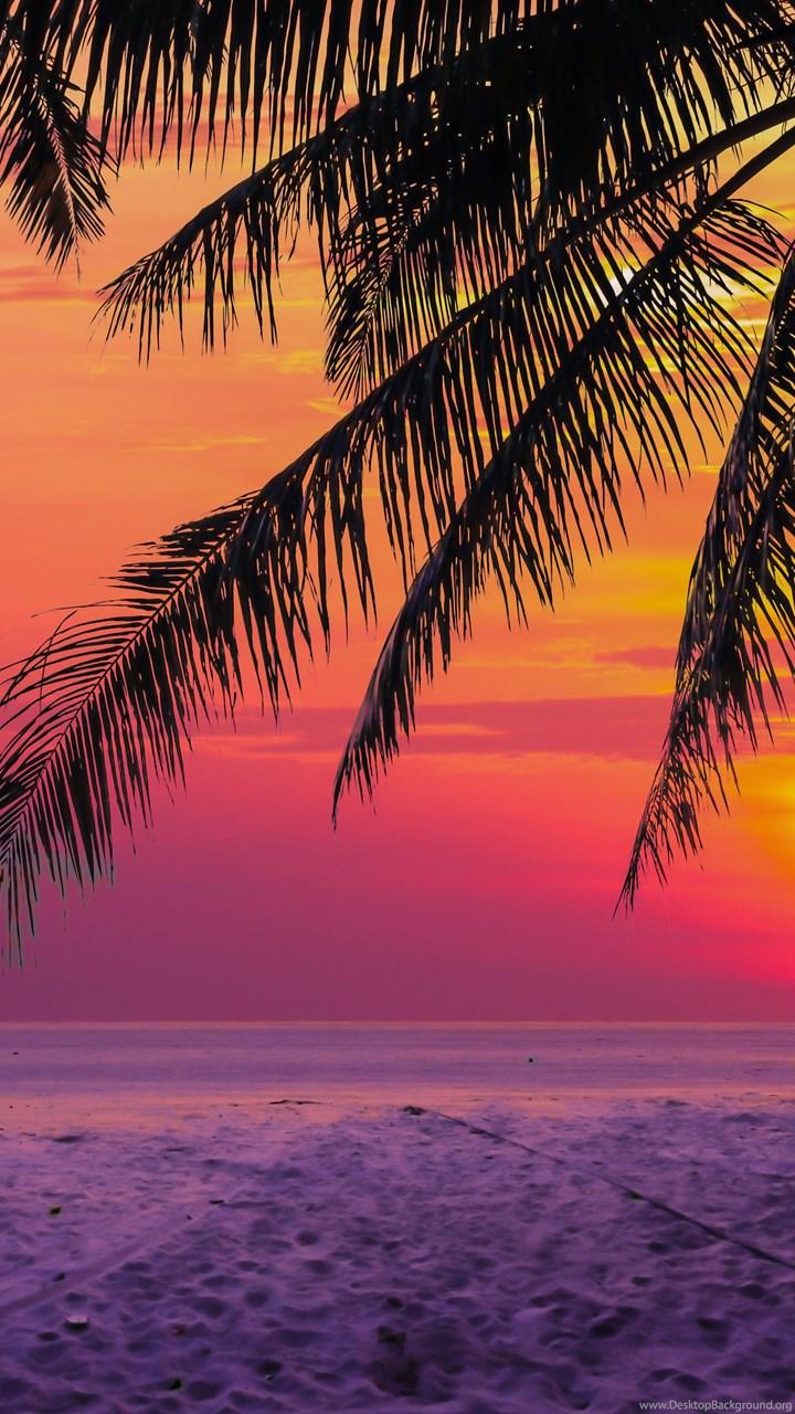 S8 Wallpaper Hd Tropical Sunset Desktop Background