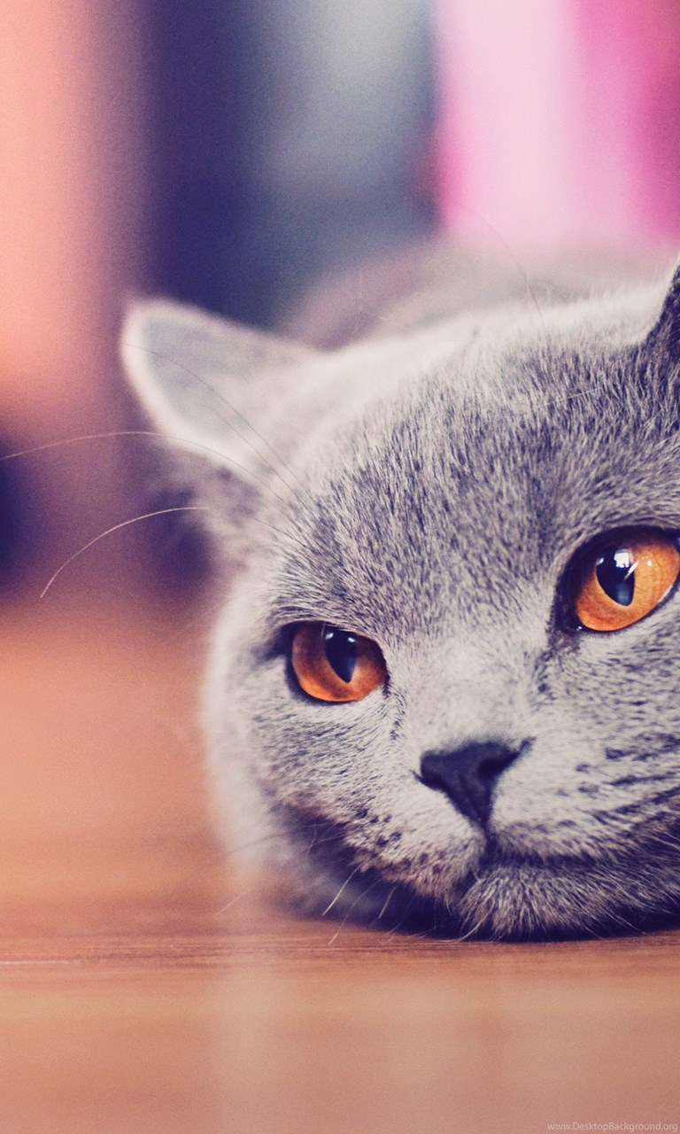 Iphone X Style Wallpaper Cute Cat Tumblr Hd Wallpapers For Desktop Backgrounds Hd