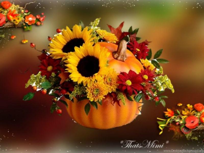 Iphone 5 Wallpaper Fall Fall Flowers Wallpapers Celebrate Autumn Fall Pumpkin
