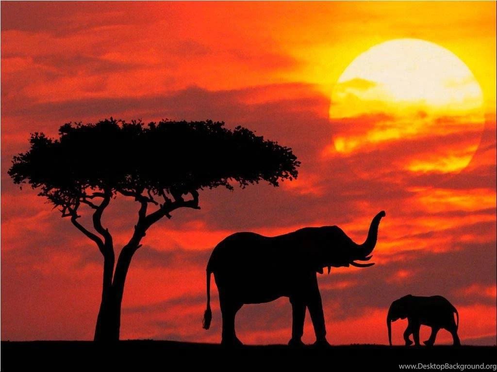 Lavender Iphone Wallpaper Elephant Desktop Backgrounds Desktop Background