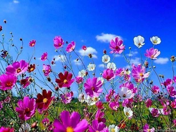 Desktop wallpaper spring flowers shareimages flowers desktop wallpapers spring jpg mightylinksfo
