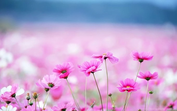 Cute flower backgrounds hd siewalls pretty flower backgrounds hd wallpapers desktop mightylinksfo