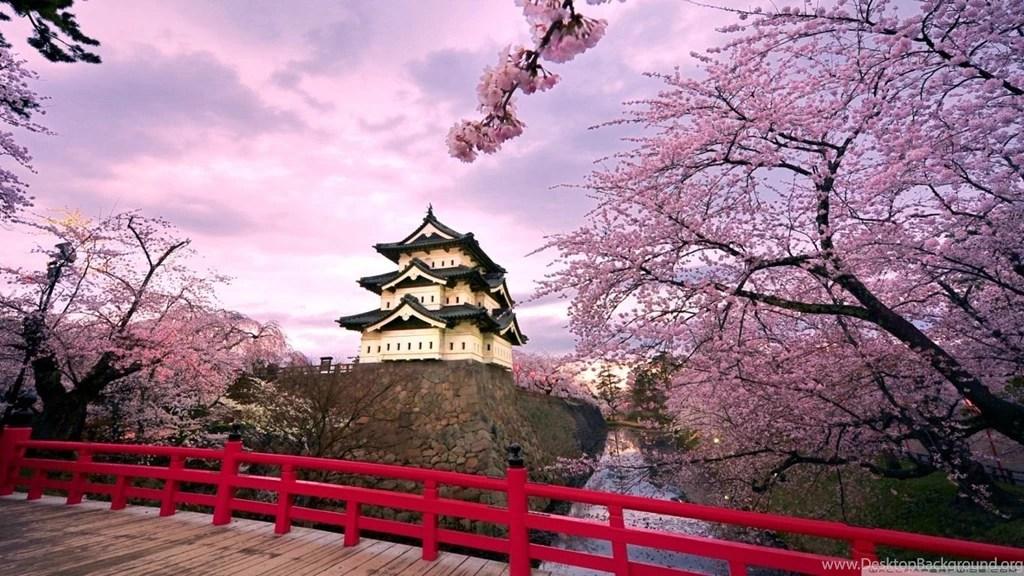 Iphone X Cherry Blossom Wallpaper Cherry Blossoms Japan Hd Desktop Wallpapers High