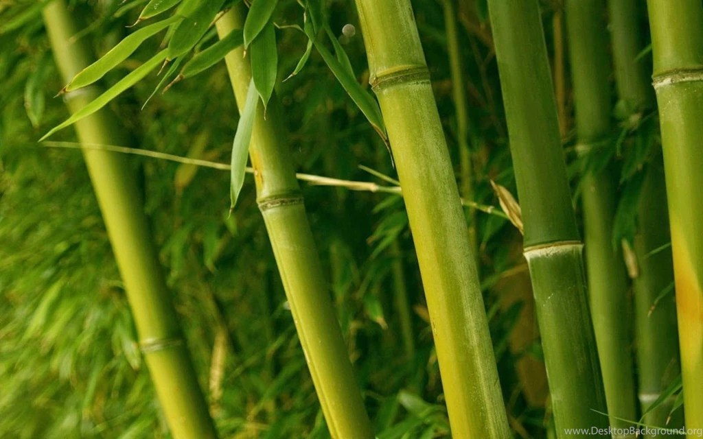 wallpapers bamboo wallpapers desktop